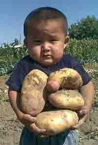 картошку ребенку