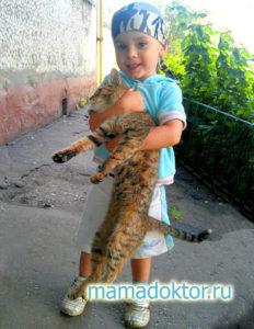 Чем можно заразиться от кошки