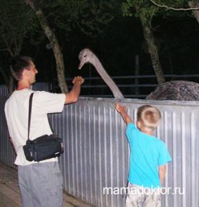 страусы Отдых с ребенком в Анапе