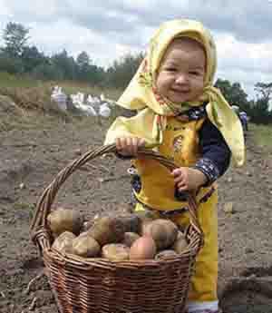 картофель как лекарство