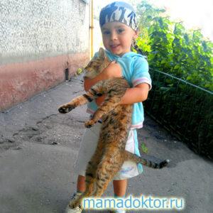 Чем можно заразиться от кошки ?