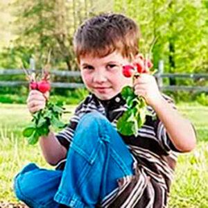 Редиска ребенку Противопоказания
